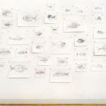 35 Fish Blueprints
