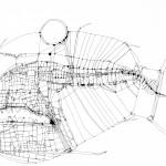 Fish Blueprint No. 15
