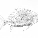 Fish Blueprint No. 34